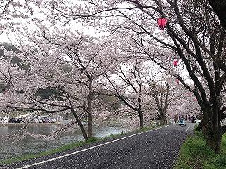 岡山県井原市まで花見に行きました。