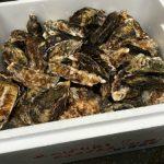 2017年 寄島産牡蠣の年内の状況をご報告。