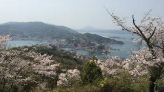 音戸の瀬戸公園で花見。桜満開で人多し。