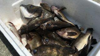 小豆島 三都半島の神浦漁港でライトゲームをしてメバルやカサゴを釣る。